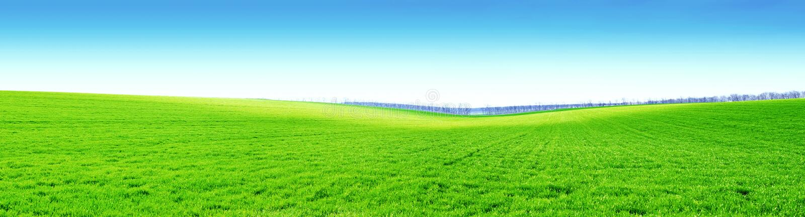 Green field and blue sky. Wide angle view of green field or crop with a clear blue sky stock images