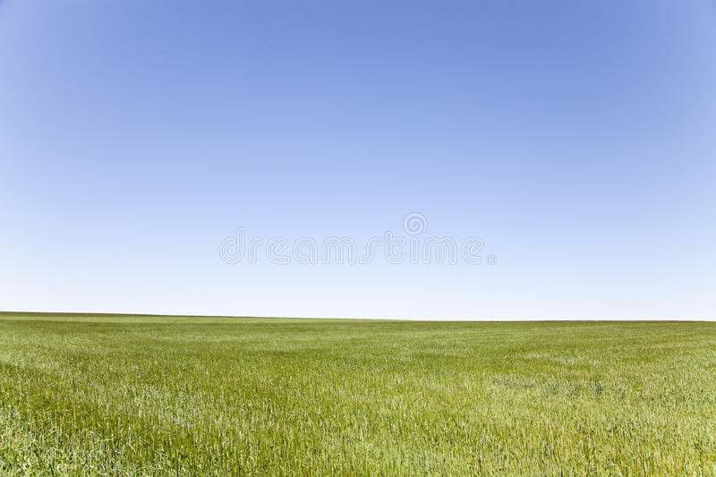 Download Green field, blue sky stock image. Image of leon, europe - 25913357