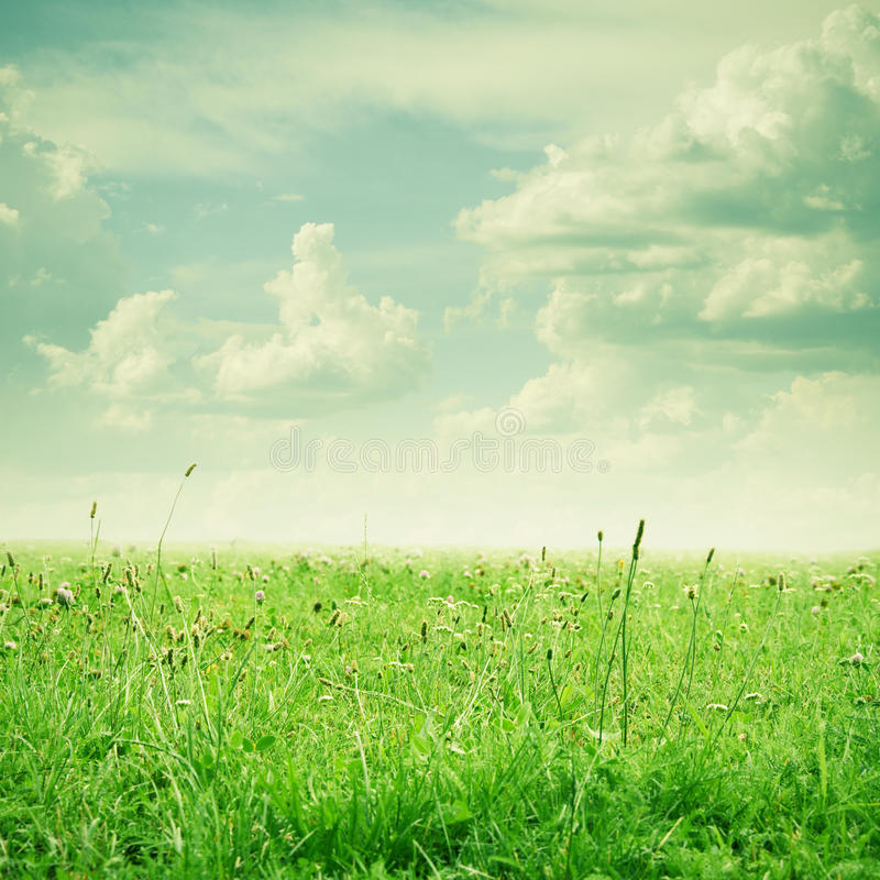Green field and blue sky. Nature background royalty free stock photography