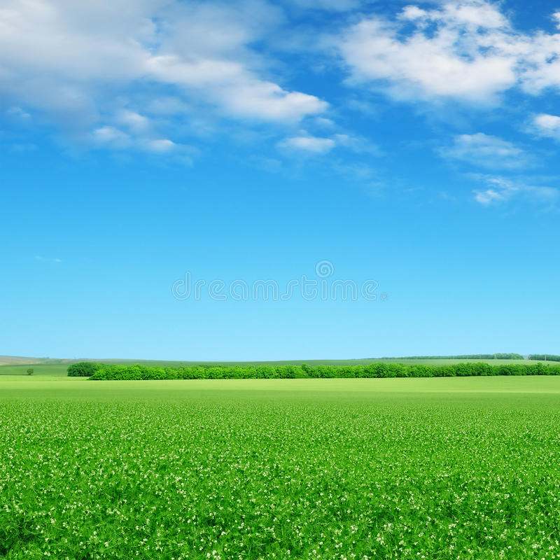 Green field and blue sky. With light clouds stock photos