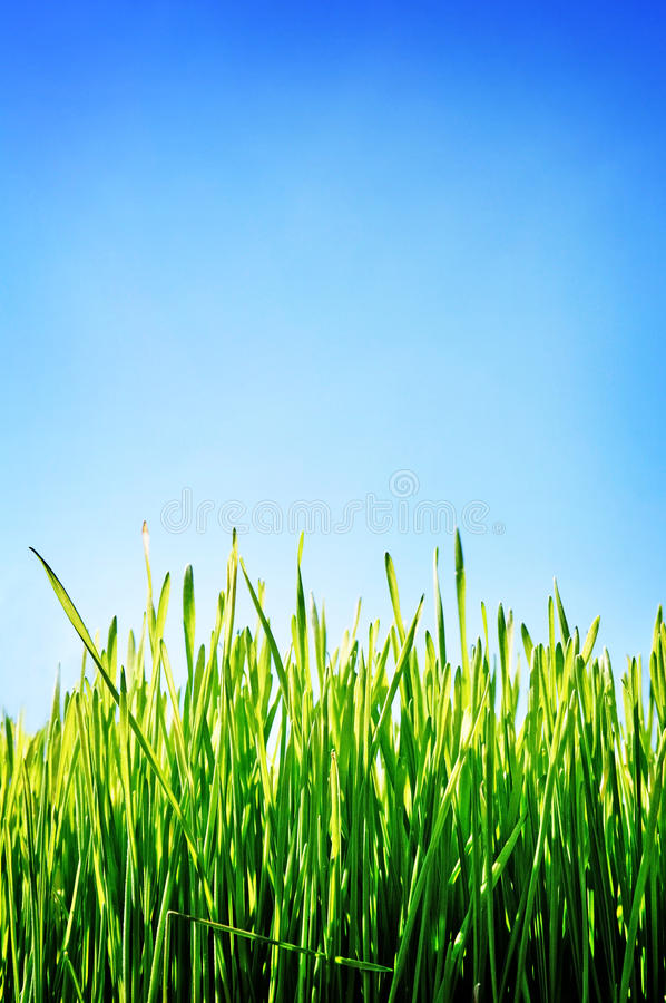 Green field blue sky, background stock photos