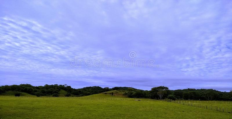 Green field and blue sky. Beautiful image of the countryside, cattle ranch, beautiful blue sky, property of the field stock photo