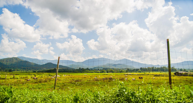 Green field with blue sky and cloud royalty free stock photos