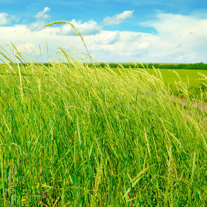 Download Green Field And Blue Sky With Clouds Stock Image - Image: 83705031