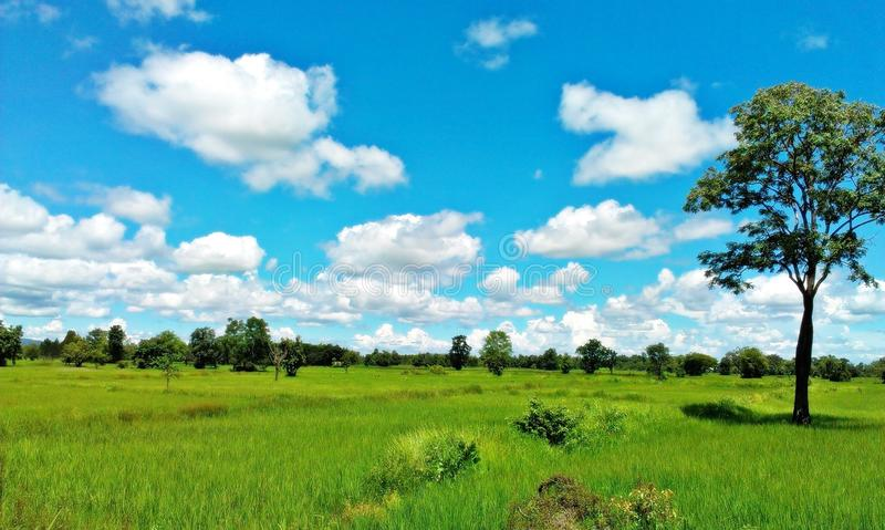Green field Blue Sky Environment Infinity Concept royalty free stock images