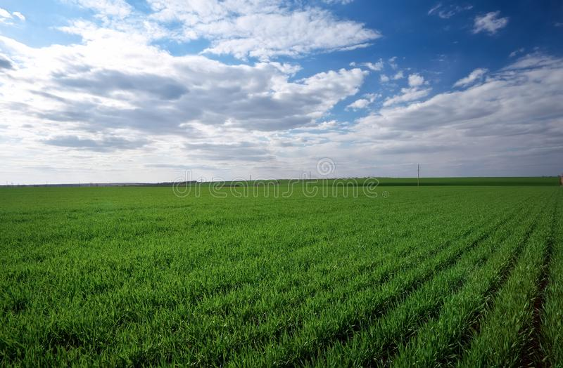 Green field and blue sky with light clouds.  stock photography