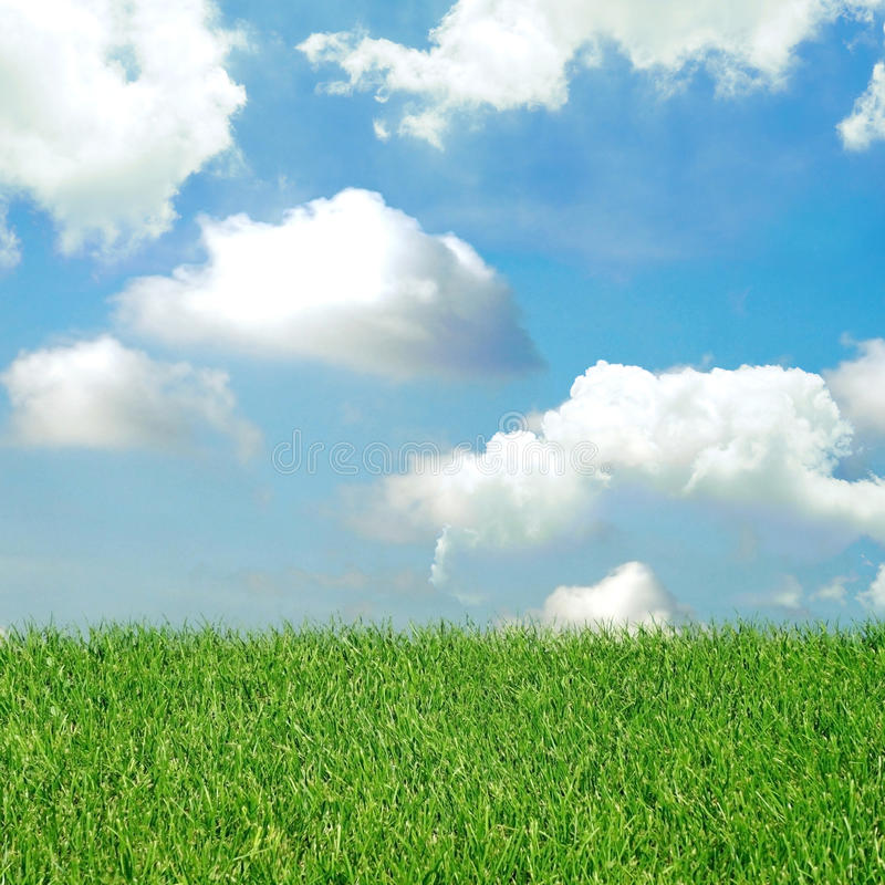 Green field and blue sky with light clouds. stock photo
