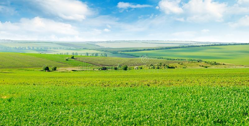 A Green field and blue sky with light clouds. Wide photo stock image