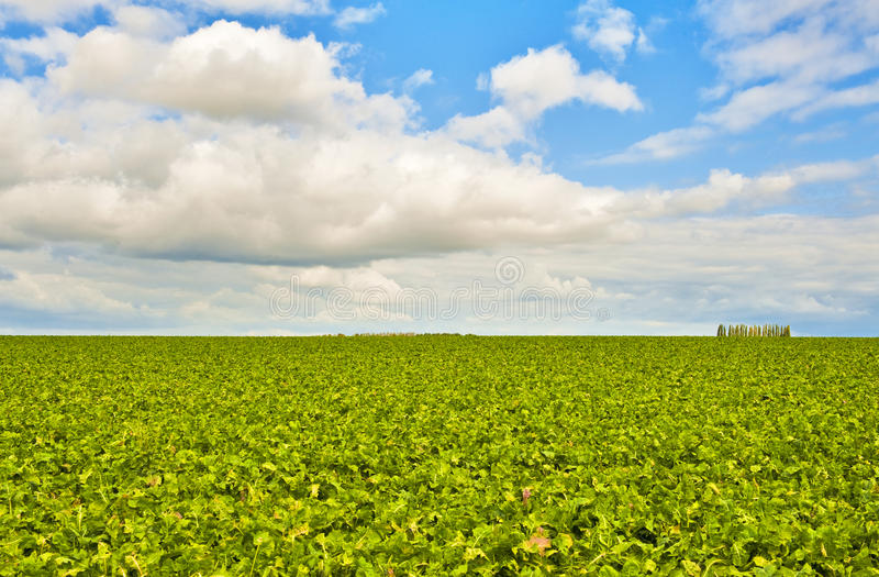 Green field and a bright sky