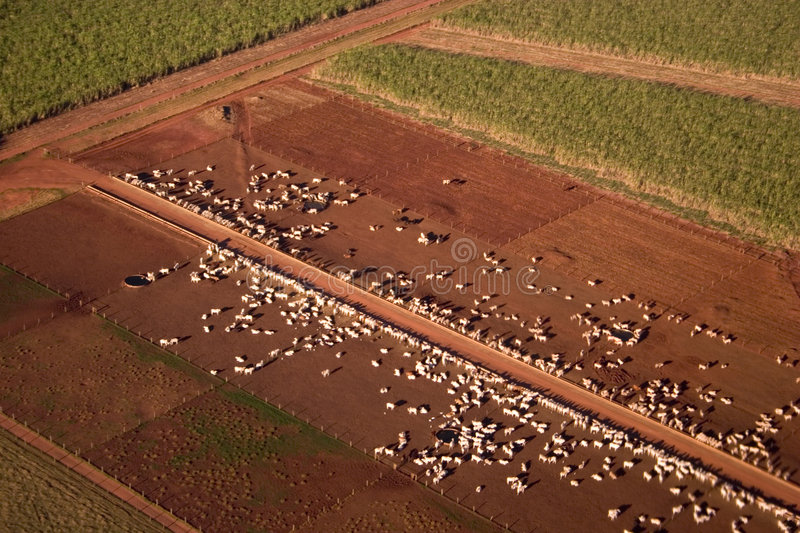 Green Field and Cattle. Aerial view from a large cattle confinement in the cattle breeding center of Brazil royalty free stock photography