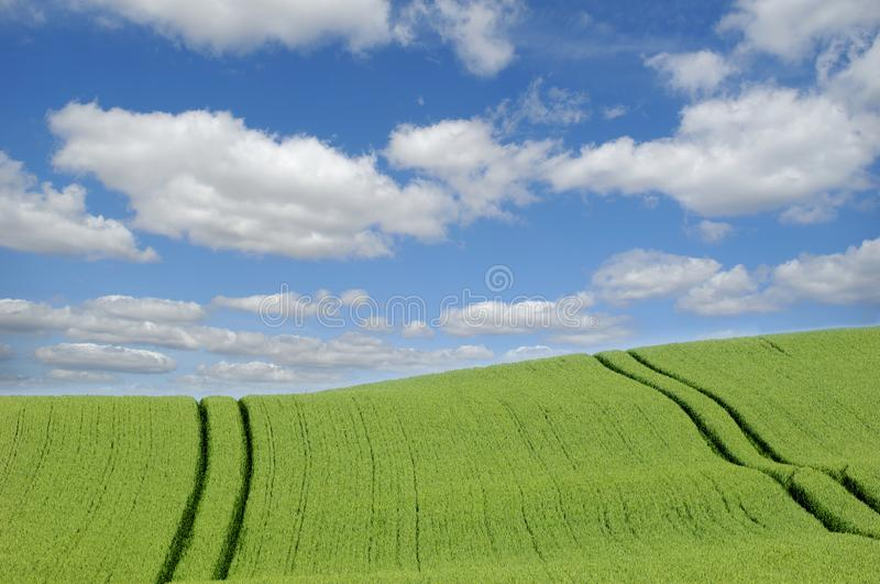 Download Green field and clouds stock photo. Image of farm, clouds - 2594266