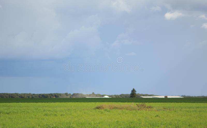 Green field in the countryside royalty free stock image