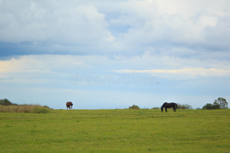 Green field in the countryside royalty free stock photography
