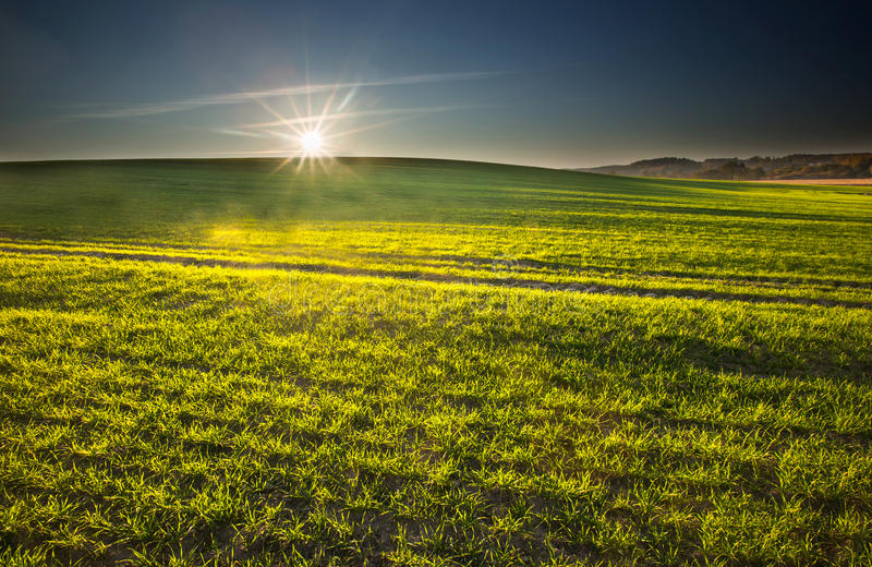 Green field landscape. At early springtime royalty free stock photos