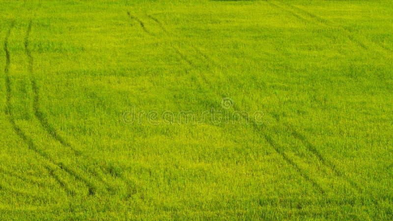 Green field lush royalty free stock image