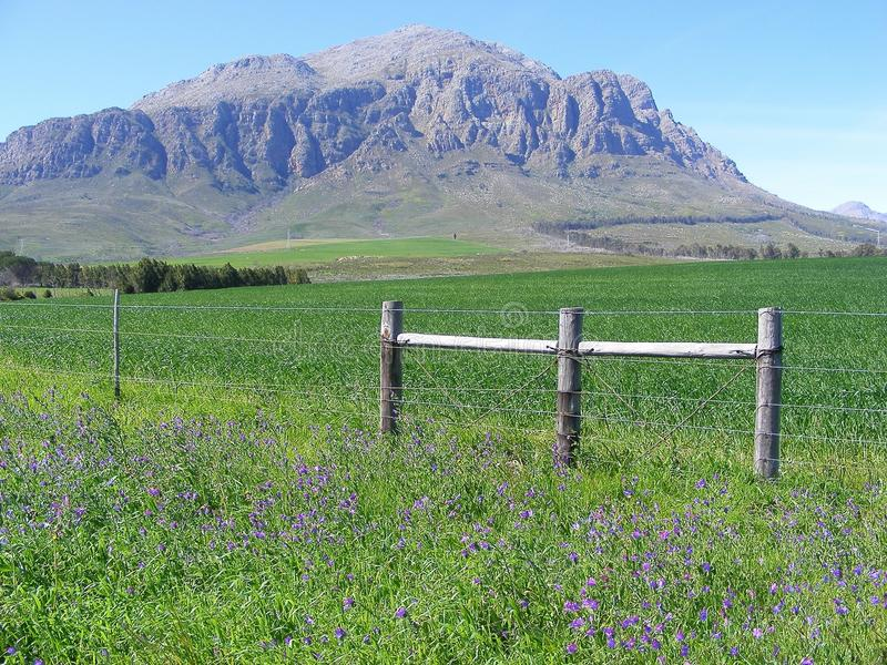 Green field mountain. The Mosterthoek mountains form an impressive backdrop to a green field near Wolseley in the western Cape province of South Africa royalty free stock photography
