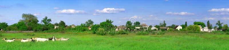 Green field panorama royalty free stock photo