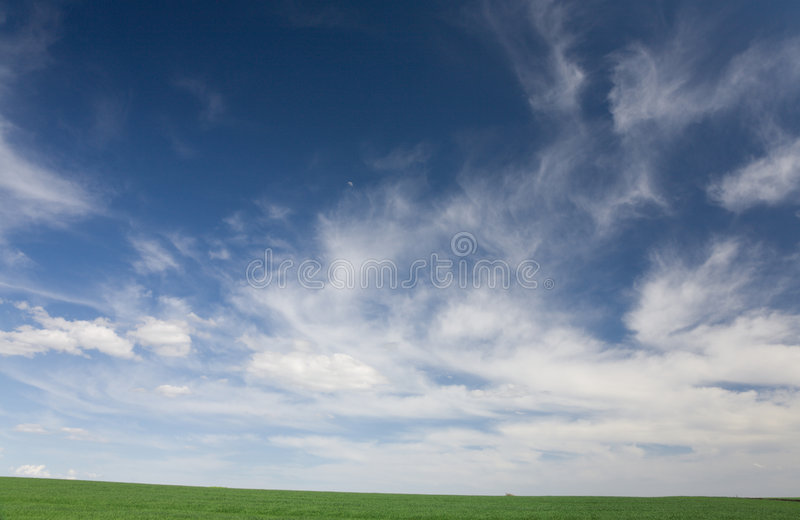 Green field in the spring royalty free stock photos