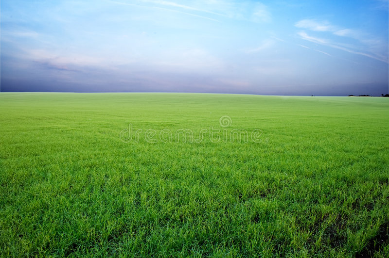 Green field and stormy sky stock photography