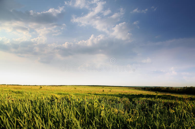 Green field of summer grass. And cloudy sky royalty free stock photography