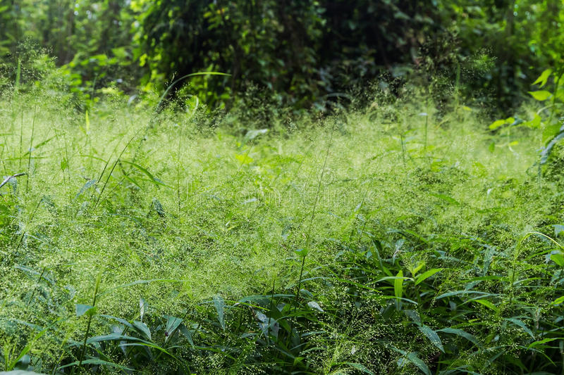 Green field Summer Grass Meadow With Bright Sunlight,Sunny Background. Green field Summer Grass Meadow With Bright Sunlight,Sunny Spring Background royalty free stock photos