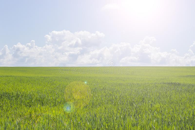Green field on a sunny day, green grass and blue sky, landscape wallpaper background. Beautiful nature, sunbeam. Rural landscape stock photos