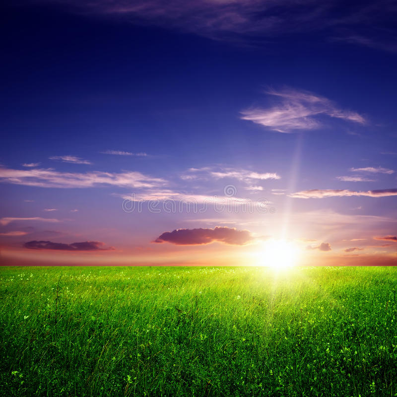 Green field and sunset stock image