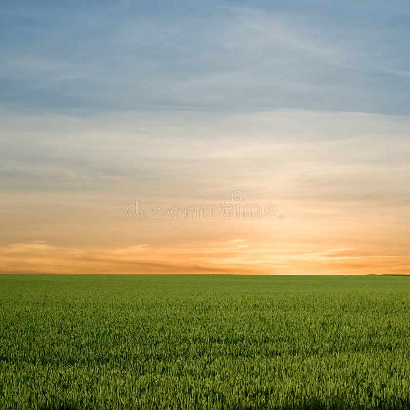 Green field sunset. A beautiful orange sunset (sunrise) over a green field royalty free stock photography