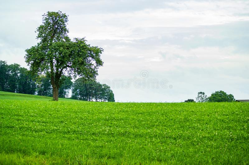 Green field with tree on a cloudy overcast summer day stock image