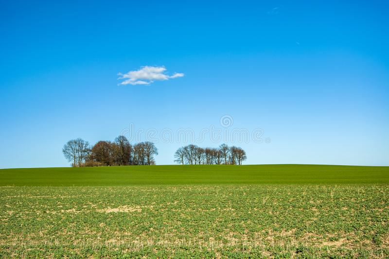 Green field, trees on the horizon and white cloud on the blue sky. Green field, trees without leaves on the horizon and white cloud on the blue sky royalty free stock image