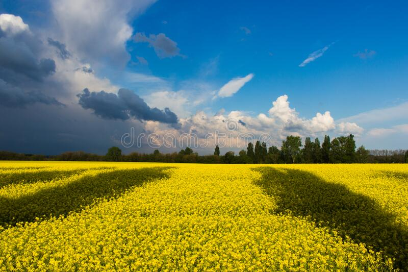 Green Field Under White and Blue Clouds during Daytime royalty free stock photos