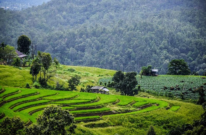 Green field view at Pa Pong Piang Rice Terraces, Mae Chaem, Chiang Mai. Thailand, the nature of the homestay is during the rainy season of Thailand July to stock photos