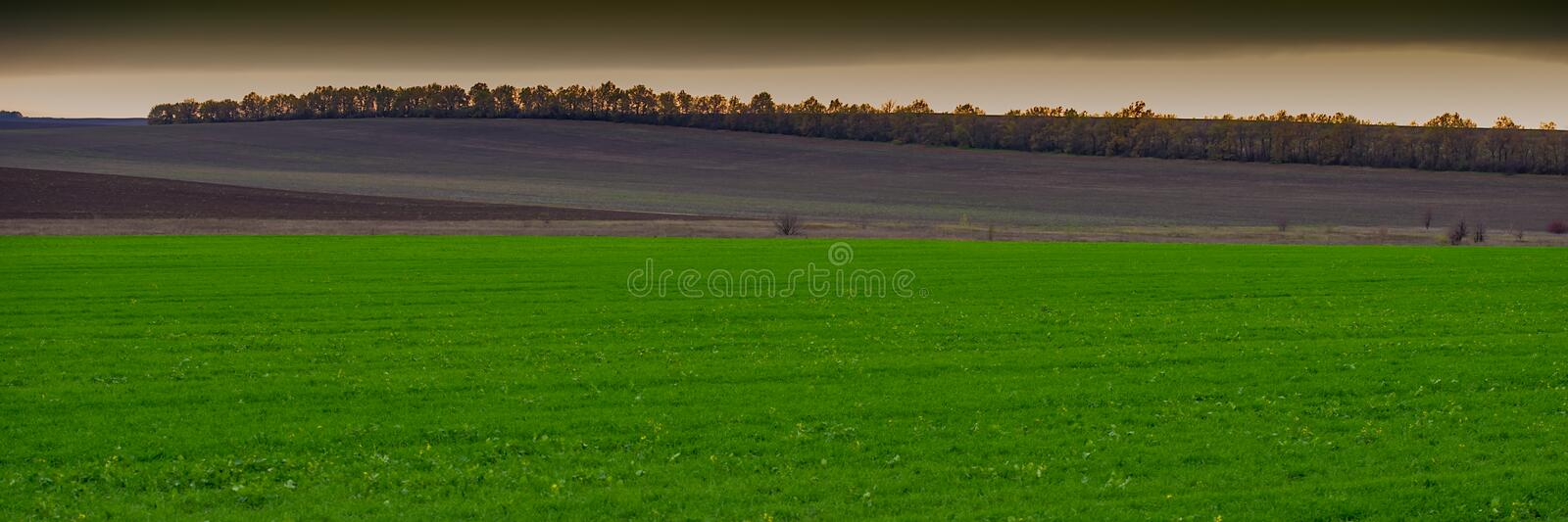 Green field of winter wheat against the background of a plowed field in a hilly area, landscape panorama. Web banner stock photo