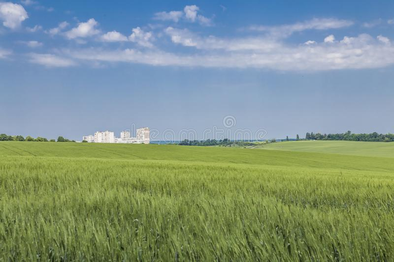 Green field of winter wheat on blue cloudy sky background in spring in sunny day, high-rise сity buildings on the horizon stock photography