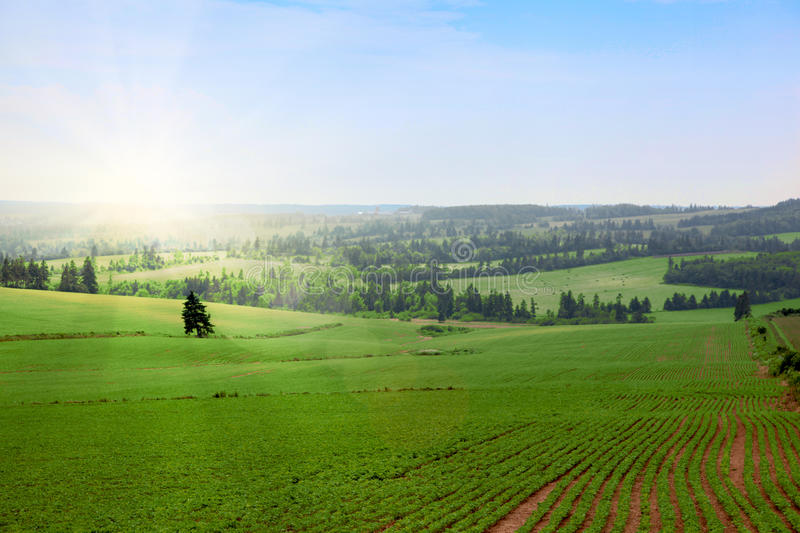 Download Green fields stock photo. Image of clear, farm, background - 18055474