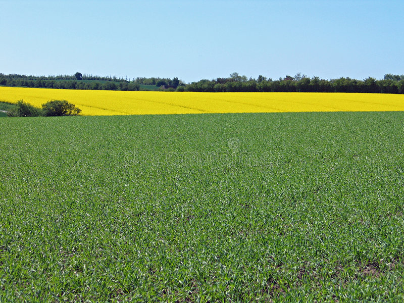 Green fields background royalty free stock image