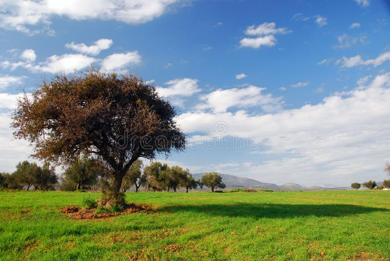 Green fields, blue sky, lonely tree stock photo