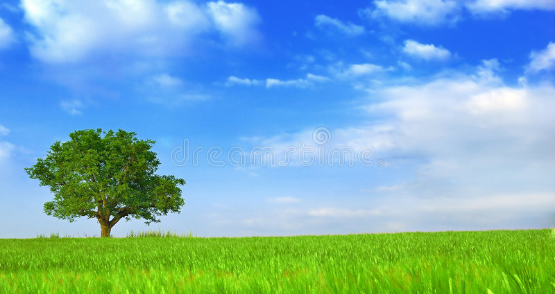 Green fields, the blue sky and tree 2 royalty free stock image