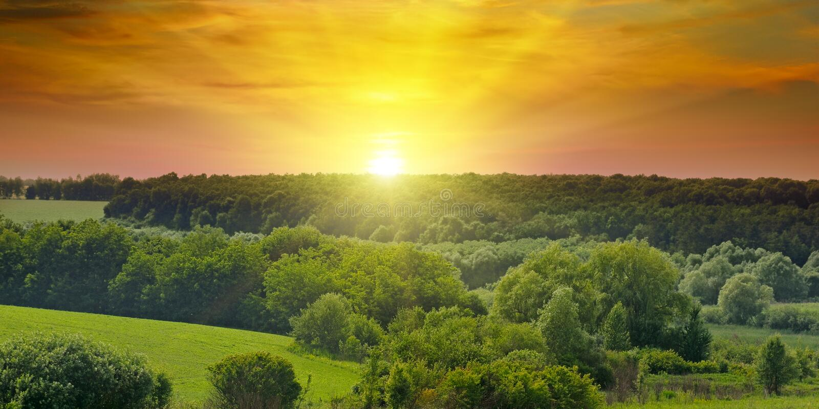 Green fields and bright sunrise. Wide photo. Agricultural landscape. stock image
