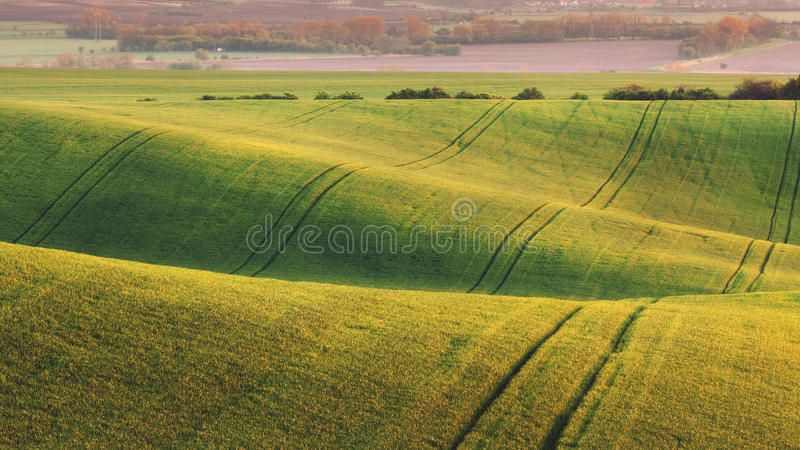 Green fields in the evening in South Moravia. Czech Republic. Waves hills with green grass, rolling fields. Beautiful spring landscape at sunset. Agriculture stock photos