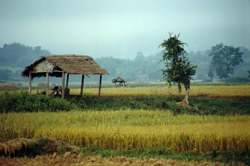 Green Fields of Hsipaw - Myanmar stock photo