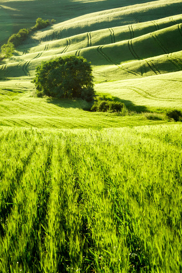 Green fields stretching to the valley in Tuscany royalty free stock photo