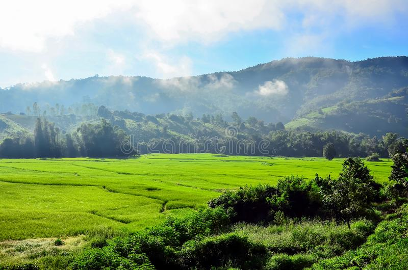 Green fields surrounded by mountains, trees and fog ,  Chiangmai Northen Thailand stock image