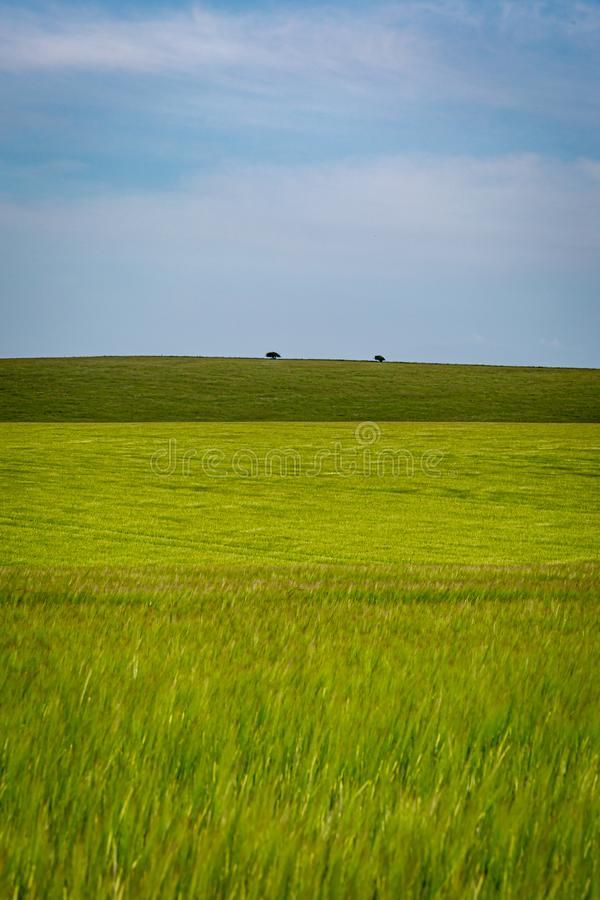 Sussex Farm Landscape. Green fields in Sussex on a sunny summers day royalty free stock image