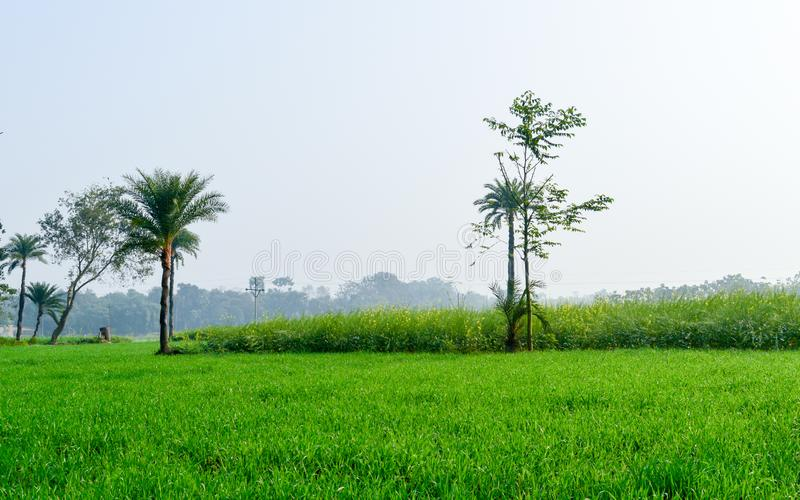 Green fields and trees in a scenic agricultural landscape in rural Bengal, North East India. A typical natural scenery with an royalty free stock image