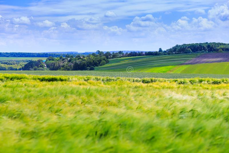 Green fields of wheat, rye, soy and corn. Blue sky with cumulus stock photo