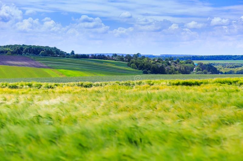 Green fields of wheat, rye, soy and corn. Blue sky with cumulus royalty free stock photo