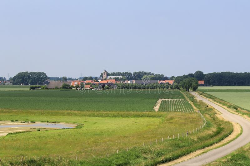 The green fields in the dutch countryside with a little vilage in the back. The green fields in zeeland, holland in summer with growing crops and the little stock image