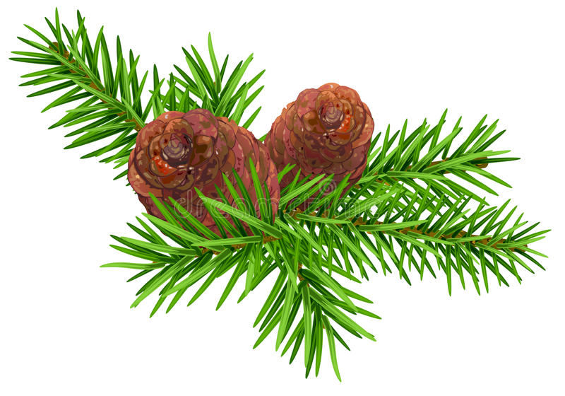 Green fir branch and two cone vector illustration