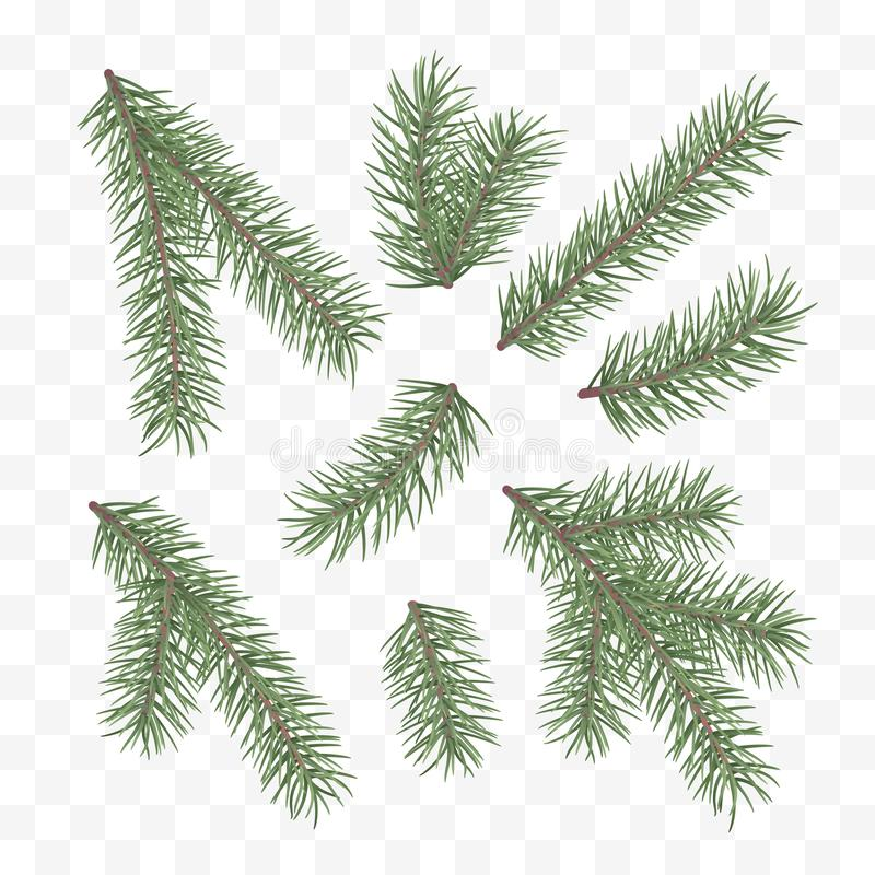 Green fir branches. Holiday decor element. Set of a Christmas tree branches. Conifer branch symbol of Christmas and New Year. Vector illustration isolated on vector illustration